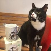 Kočičí kavárna Pohoda