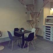 Kočičí kavárna Plzeň